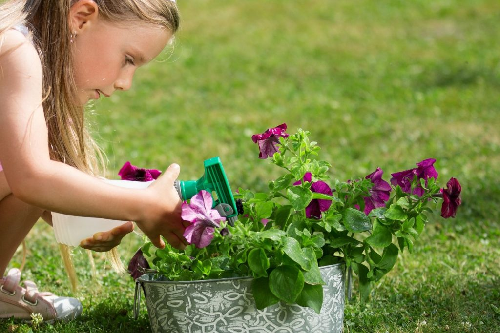 Natural Ant Repellent For Your Garden & Yard